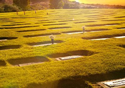 sg-cemetery-comp