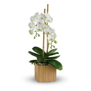 T98 2A 300x300 - Teleflora's Opulent Orchids